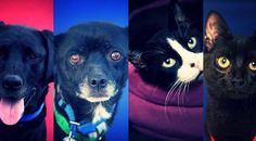 Adoptable Pets of the Week -- repin and spread the word! I wish I could take in more pets but I've already gotten a little out of hand...
