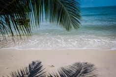 Penang National Park Monkey Beach Trek Malaysia #penang #Malaysia #Beach #Monkeybeach #topbeach