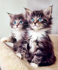 *** kitties! - Cat Class   Cat Style