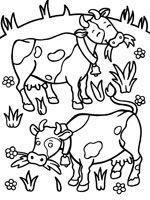 Coloriage de Vaches