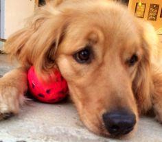 Rusty's new ball !!