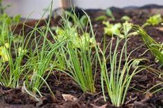 Dicas e novidades sobre jardinagem! Plantei Garden Center