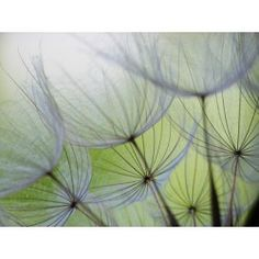 Vlies fotobehang Dandelions - Bloemen en planten | Fotobehangen.nl