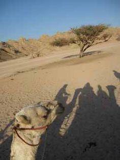 http://www.italian.book-tour-egypt.com/show.php?bsort=Sharm%20El%20Sheikh%20%20%20%20%20%20%20%20%20%20%20%20%20%20%20%20%20&subsort=Escursioni%20di%20Divertimento&page=%20parco%20Acquatico%20%20&trip=show