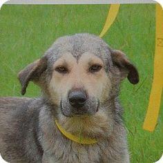9/5/`15 Philadelphia, PA - Husky Mix. Meet Missy, a dog for adoption. http://www.adoptapet.com/pet/13765460-philadelphia-pennsylvania-husky-mix