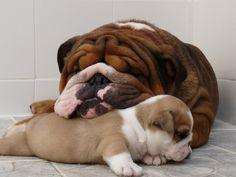 Amor de madre!!!