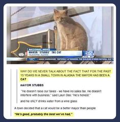 Stubbs the cat. The fact that this is real is really the best thing.