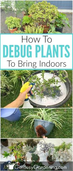 If you're like me, you put your houseplants outside during the summer. But how do you bring them back inside in the fall without spiders, and other creepy crawlies? It's easy! Check out this method for debugging houseplants before bringing them indoors. I know what I'll be doing this weekend!