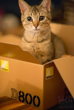 Are you sad, Person?  I'll let you play with my box.