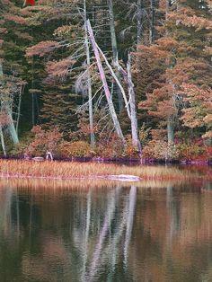 ✮ Swans Falls near Fryeburg, Maine