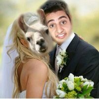 He always says he's going to marry a llama.