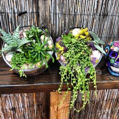 No Experience Is Required To Design A Terrarium Or Herb Garden At This Social Event For Which
