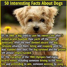 1. In 2008, a dog tried to save his owner's life after 5 armed pirates hijacked their yacht off the coast of Venezuela. After the men climbed aboard the dog furiously attacked them, biting and snapping until he was stabbed then shot. The dog survived and the pirates left almost empty-handed. 2. Tihar, a festival in Nepal that dedicates an entire day to thanking dogs for their friendship and loyalty.