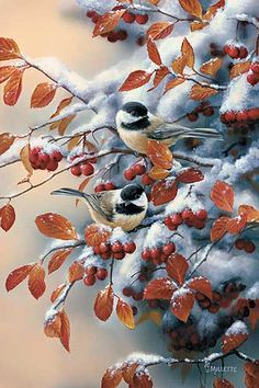 Winter Gems-Chickadees by Rosemary Millette