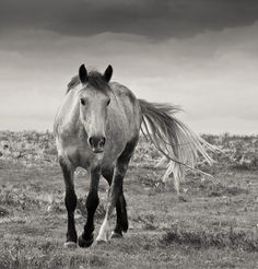 I love taking pictures of the New Forest ponies, especially on a stormy day.