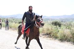 """Someone has said the Cretan horse """"doesn't waste the time of those who waste its own time"""". This is just one of the comments about the special characteristics of Crete's indigenous equine breed. Th..."""