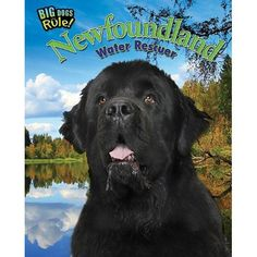 In this narrative nonfiction book, readers will learn about the history of the breed, unique personality traits, and of-course their legendary water rescue skills, and more. 32-page book, hardcover (r