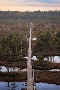 Autumn swamp (Endlaraba, Jõgeva, Estonia) by Igor Yatsino on 500px #travel #Europe #Estonia Repinned by http://www.iconiceurope.com/