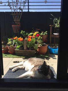 Atticus Cat | Pawshake Brunswick east
