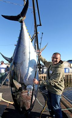 Giant Tuna on Shimano Talica 50 – BDOutdoors Tuna Fishing, Fishing Boats, Atlantic Bluefin Tuna, Offshore Fishing, Fishing T Shirts, Nova Scotia, Love People, Man Humor, Tired
