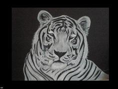 tijger geschilderd door hanny Bunt- van Scherrenburg