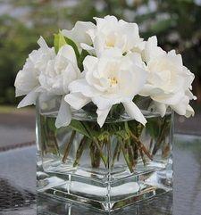 gardenia floating in water - LOVE LOVE LOVE
