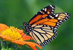 HV-Reserves-Flora&fauna-615x425.jpg (615×425)