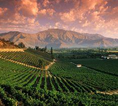 Sunset in Mendoza Argentina by travelgrape Cinque Terre Italia, Argentina Culture, Malbec Wine, Paraiso Natural, South America, Latin America, Places To See, Vineyard, Beautiful Places