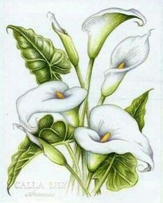 psx calla lily by Colorin' Kate - Cards and Paper Crafts at Splitcoaststampers - Trend Lilie Tattoo 2019 Lily Painting, Fabric Painting, Painting & Drawing, Art Floral, Floral Drawing, Watercolor Flowers, Watercolor Paintings, Watercolor Techniques, Easy Watercolor