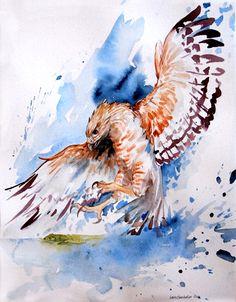 """""""Red Shouldered Hawk and Frog"""" par Laura Garabedian"""