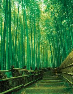 Sagano Bamboo Forest, Japan Arashiyama lies on the edge of Kyoto and has drawn tourists since as far back as the 8th century. Description from pinterest.com. I searched for this on bing.com/images