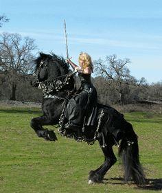 Rennaissance Friesan Friesian Horse, All About Horses, Horse Riding, War Horses, Draft Horses, Show Horses, Pretty Horses, Beautiful Horses, Animals Beautiful