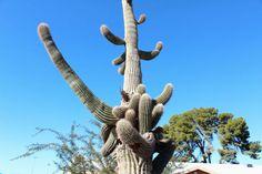 サボテンだらけの世界、日本人には想像もできないアリゾナとメキシコの旅 - GIGAZINE
