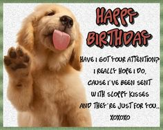 Gorgeous sloppy kisses for any dog lovers birthday. Free online Sloppy Birthday Kisses ecards on Birthday Happy Birthday Penguin, Birthday Hug, Cute Happy Birthday, Birthday Songs, Birthday Card Sayings, Birthday Wishes Funny, Beautiful Birthday Wishes, Colorful Birthday, Special Words