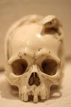 Netsuke of a skull with skink walking across it