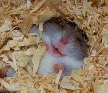 Funny pictures about Happy hamster is happy. Oh, and cool pics about Happy hamster is happy. Also, Happy hamster is happy photos. Smiling Animals, Happy Animals, Cute Baby Animals, Animals And Pets, Funny Animals, Wild Animals, Animal Captions, Animal Memes, Animal Humor