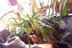 #italy #atelier Italy, Plants, Atelier, Flora, Plant, Italia