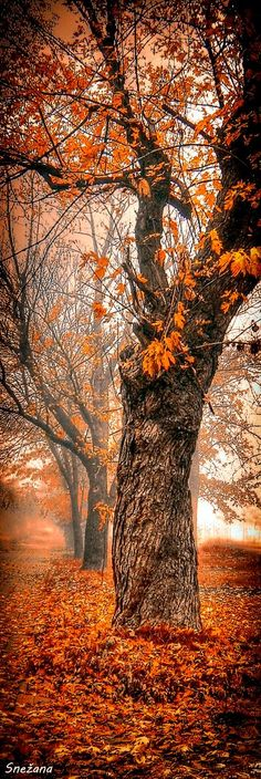 A Foggy Autumn Morning. I prefer photos only enhanced by photoshop, so true nature still has beauty. Autumn Morning, Foggy Morning, Beautiful World, Beautiful Places, Beautiful Pictures, Seasons Of The Year, All Nature, Fall Season, Belle Photo