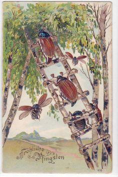 Fröhliche Pfingsten Maikäfer auf Leiter Präge AK 1912