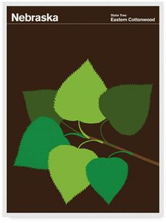 """Populus deltoides, or """"the eastern cottonwood"""", is native to North America. It is also the official tree of Nebraska, as well as one of the largest North American hardwood trees. Print Collection has Artist Canvas, Canvas Art, Voyage Usa, Illustrations, Grafik Design, Mens Gift Sets, Nebraska, Creative, Image"""