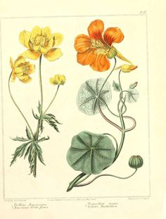 Retro Vintage Botanical Art