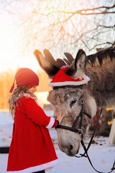 Emma Höglund ~ Only Donkeys ~ My youngest daughter Elsa and Hugin wish you a Merry Christmas! ❤️