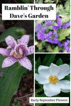 In Dave's latest blog, he shows us the first signs of fall-season flowers in the garden with some good varieties for any fall landscape.