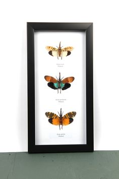Lantern flies Lanterns, Butterflies, Insects, Frame, Nature, Home Decor, Picture Frame, Naturaleza, Decoration Home