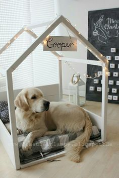 Light decor w/ name atop of ur beloved pet's framed house, not ur regular stuffy dog house, & a view to keep an eye on u...🐕🐾😍