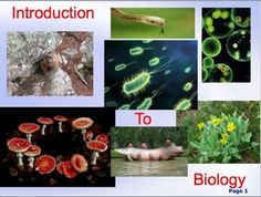 Introduction to Biology: Scientific Method, Graphing, Microscope PPT.  I use these materials in my Biology I class during the first week of school. It covers the following information: What is Science? Themes of Biology. Scientific Method. Tabling, Graphing and Analyzing Data. Early Ideas About Biology. Characteristics of Life. The Microscope.