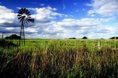 campo argentino -