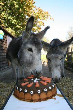 The Donkey Sanctuary - Looks like they are enjoying some Carrot Cake! @Matt Valk Chuah Donkey Sanctuary    http://www.thedonkeysanctuary.org.uk/