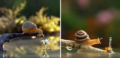 Ukrainian photographer Vyacheslav Mishchenko documented the everyday lives of snails in their delicate worlds using macro photography.