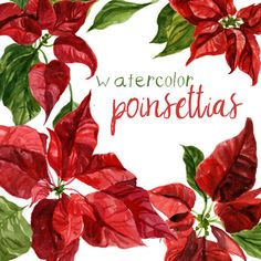 Hey, I found this really awesome Etsy listing at https://www.etsy.com/listing/478416662/watercolor-poinsettias-clipart-flowers
